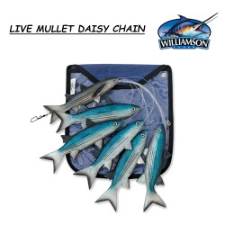 LIVE MULLET DAISY CHAIN